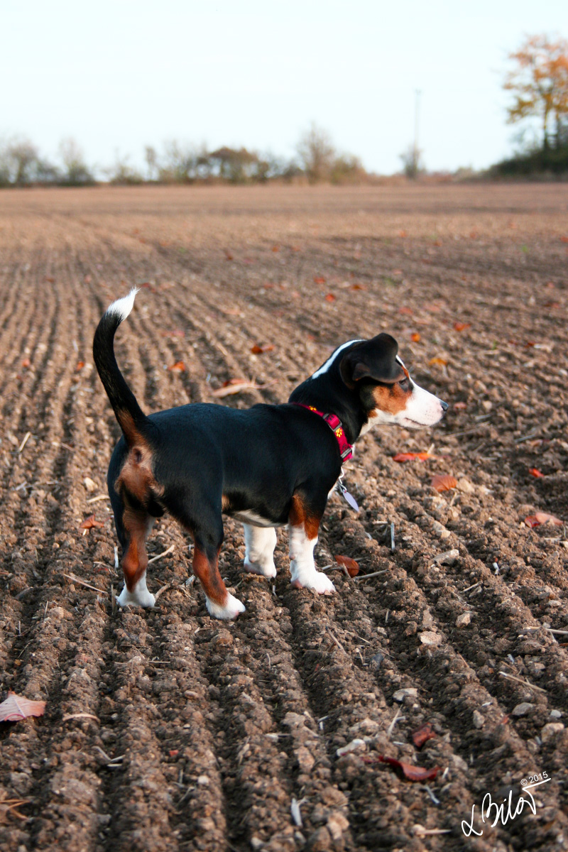 Autumn-Colours_dog-1