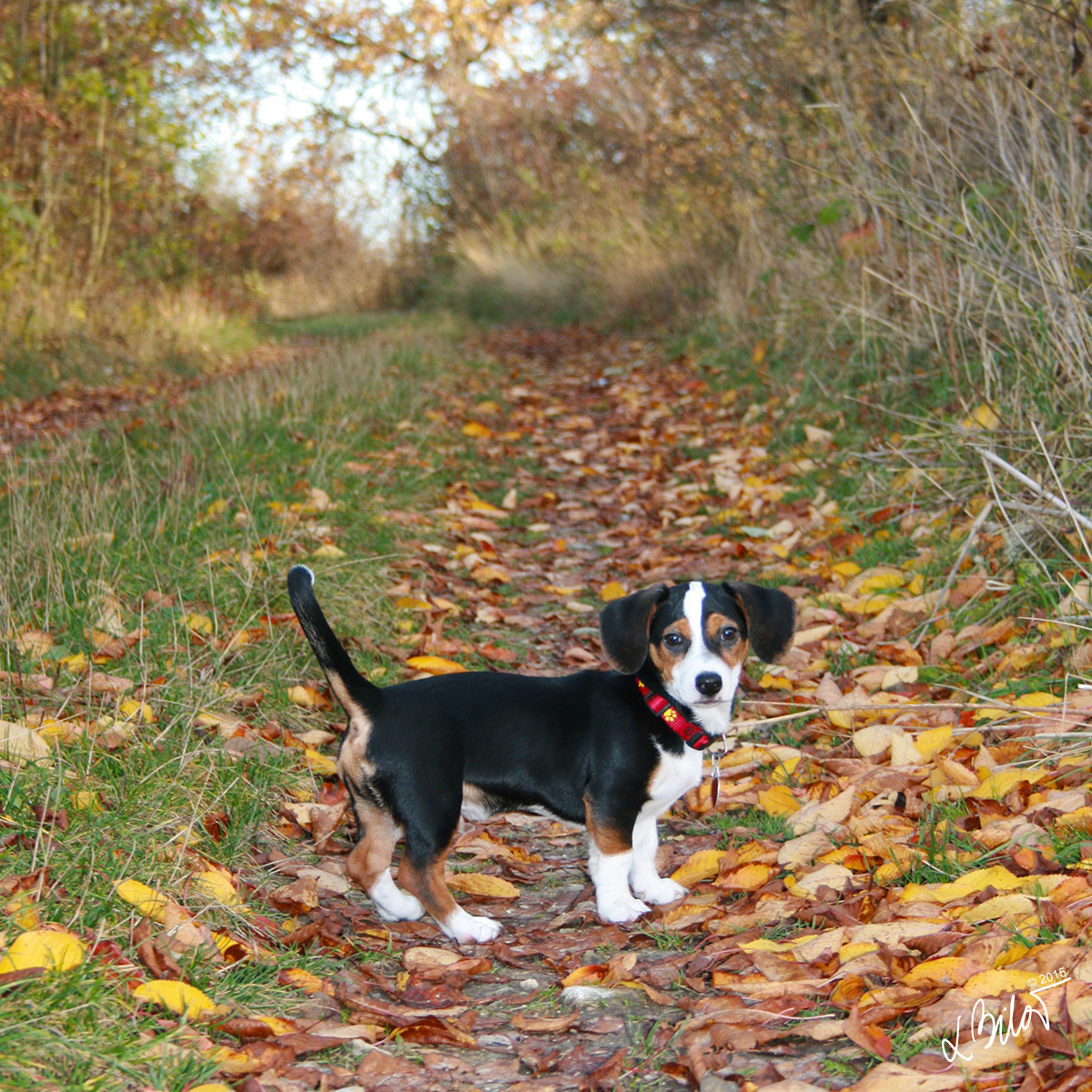 Autumn-Colours_dog