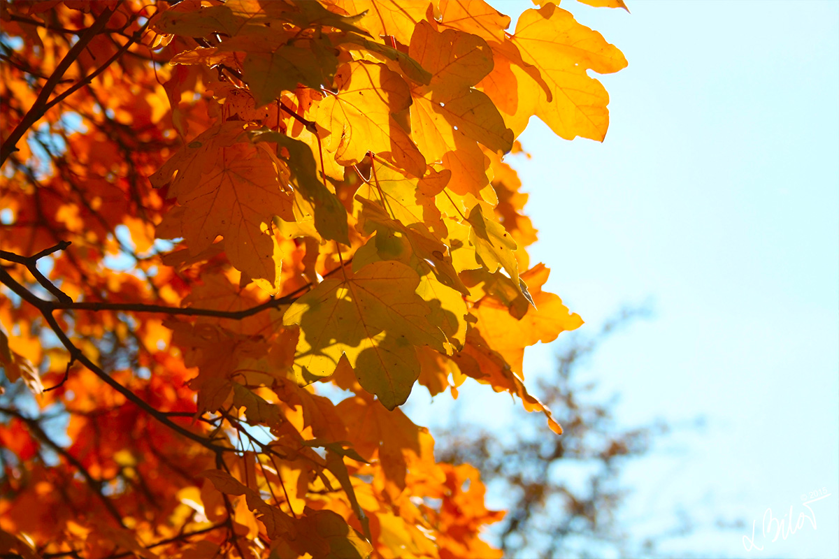 Autumn-Colours_leaves-1
