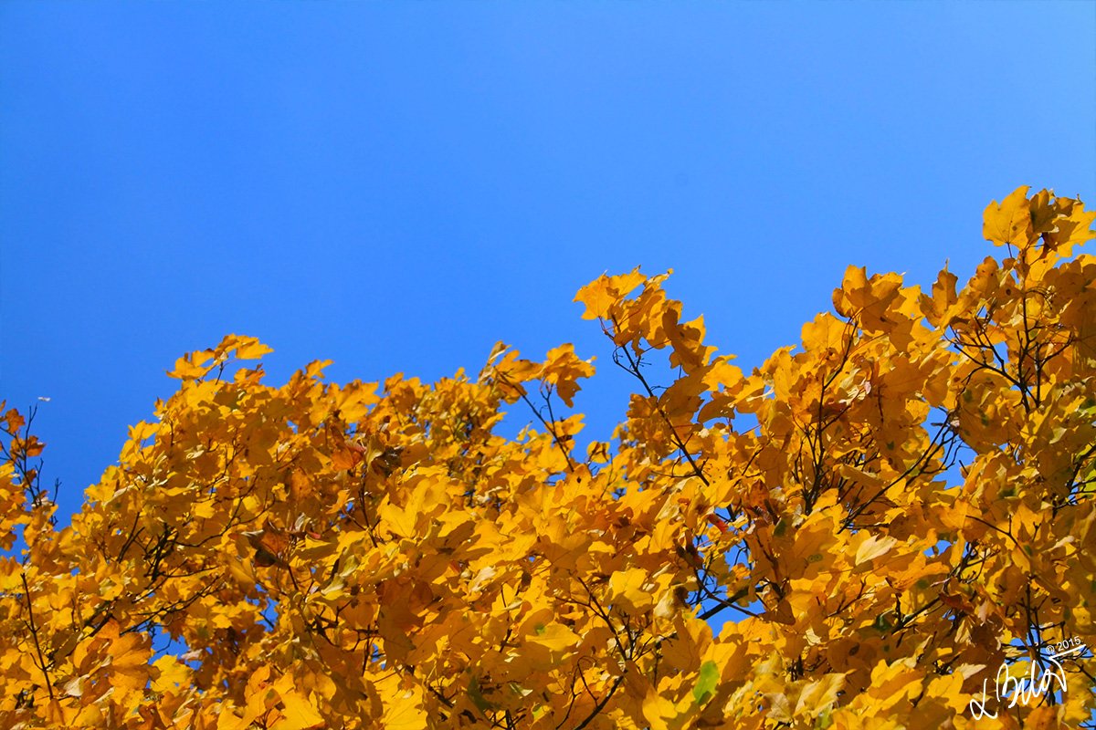 Autumn-Colours_leaves-2