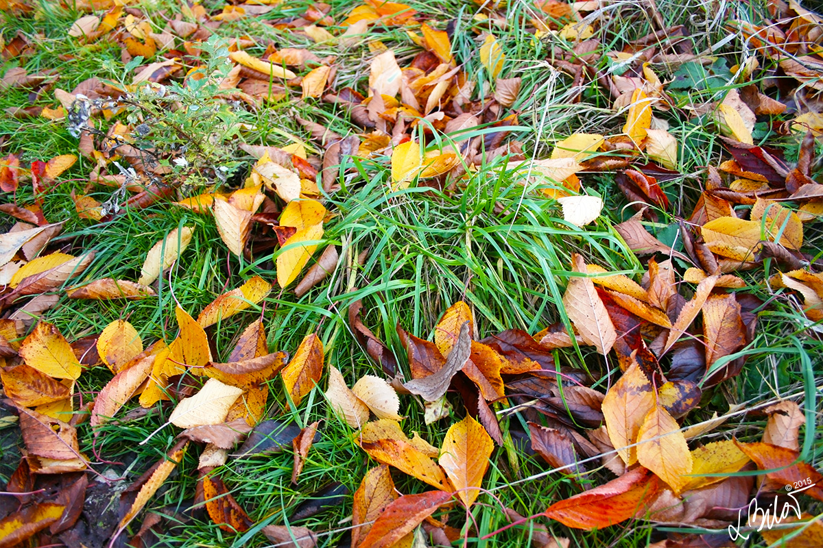 Autumn-Colours_leaves-3