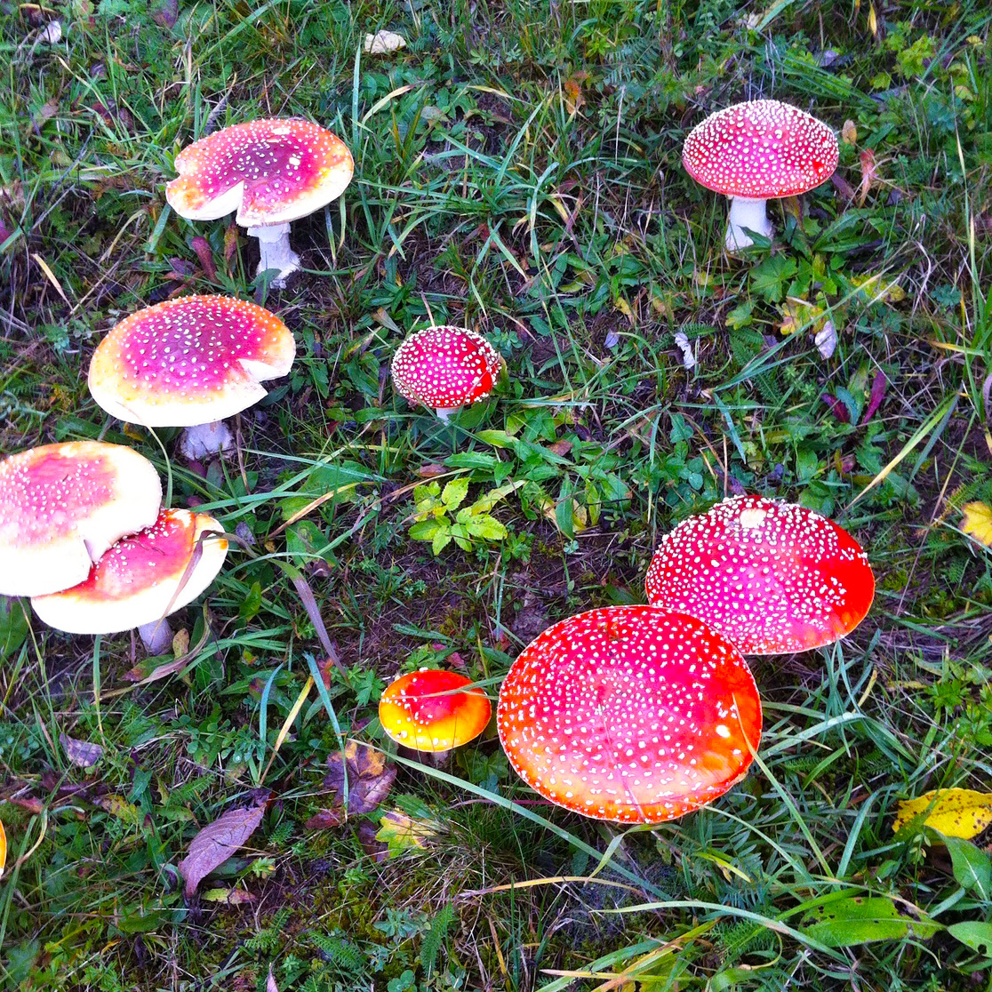 Autumn-Colours_mushrooms-1